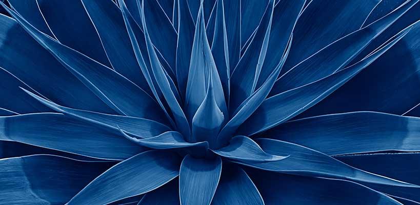 tequila blaue agave